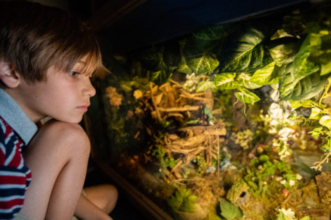 a child experiencing fairy world, a fun diorama located under the spiral staircase at the CMOSC