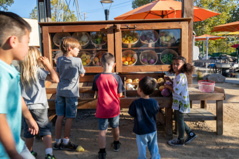 childrens farm stand play area at the childrens museum of sonoma county