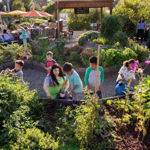 Children playing and gardening
