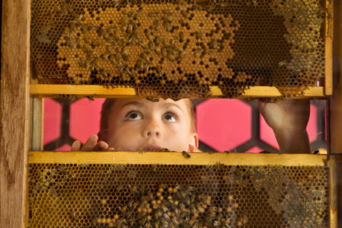child experiencing the bee exhibit at the children's museum of sonoma county