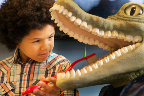 young child brushing the teeth of a plastic resin alligator to learn about dentistry
