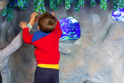 child playing in the sea grotto and ball pit