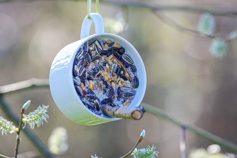 DIY bird feeder filled with birdseed and crisco