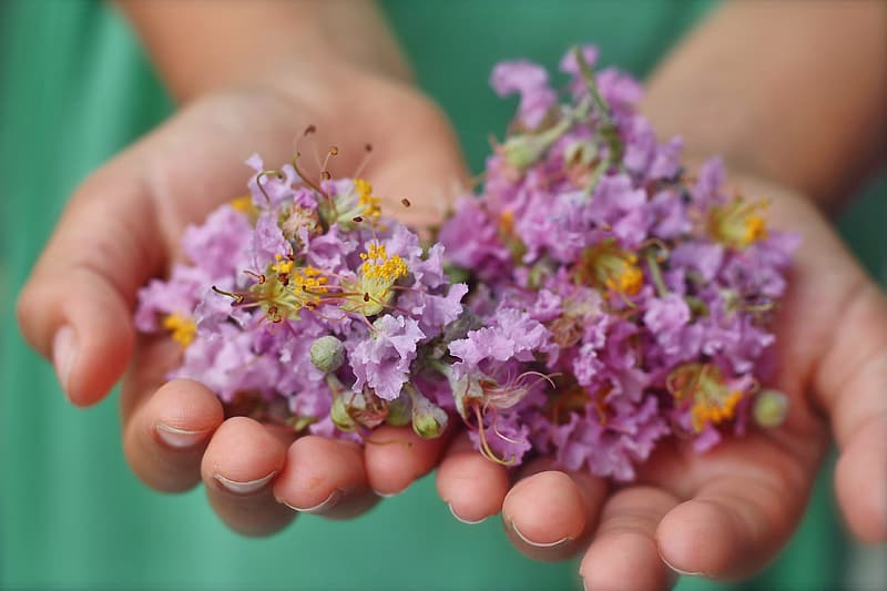 child collecting petals to create a nature bracelet