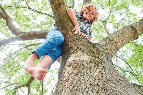 young child happily climbing a tree
