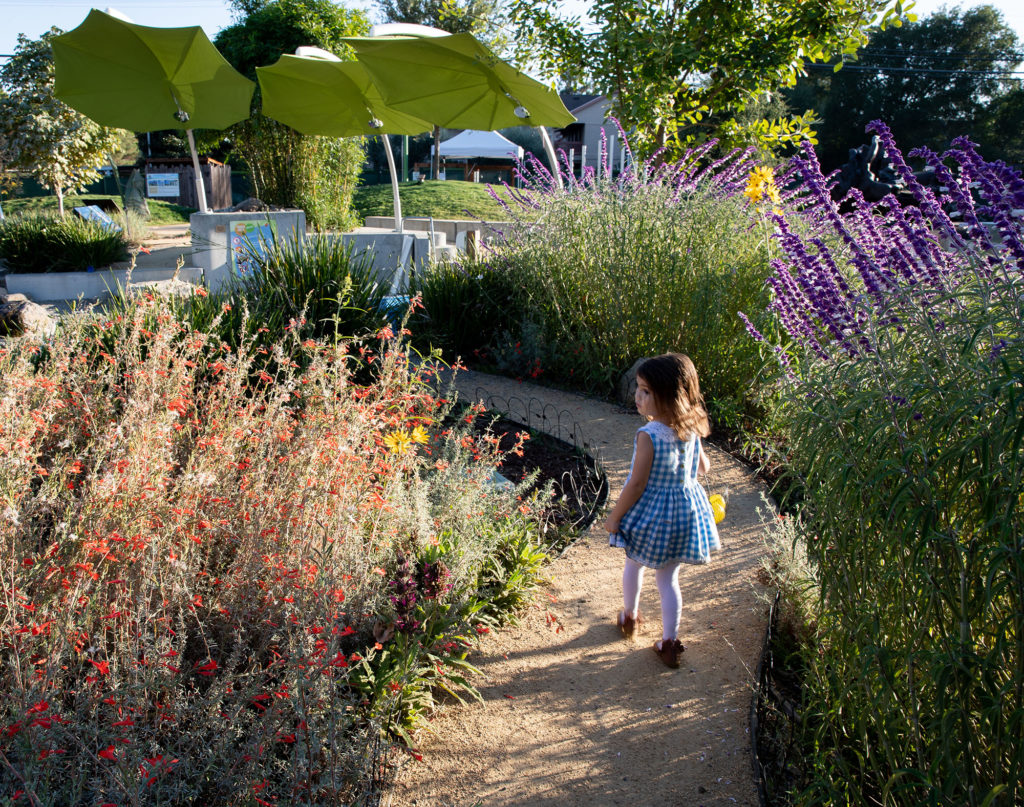 Child walking along curved garden path